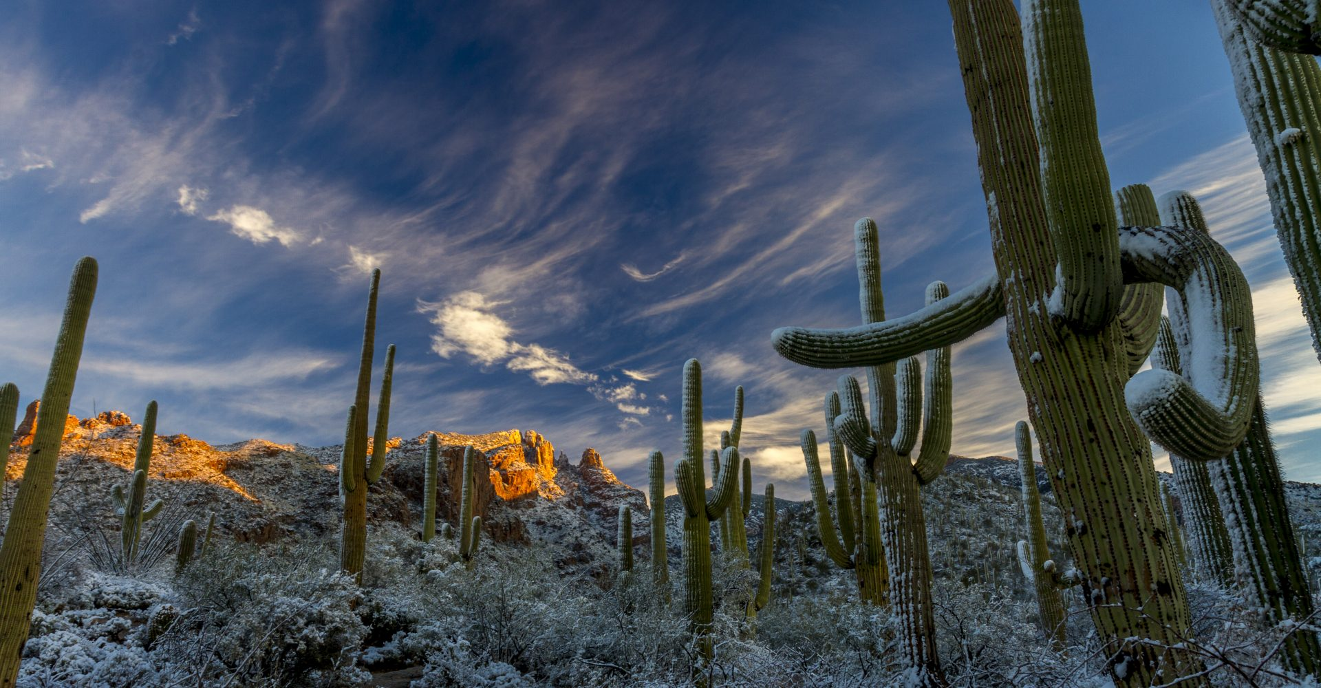 Rare Desert winter snow on giant saguaro cactus of the Sonoran Desert in Tucson Arizona on January 1, 2015. (Pete Gregoire, NOAA Small World Collection)