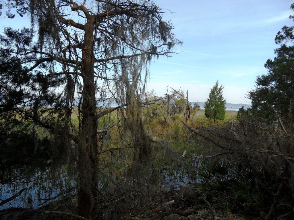Sapelo Island trees, photo by Ken Ratcliff.