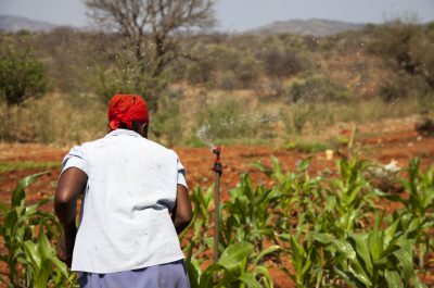 Alice Wanjeru Njue (43) in her maize crop, with the sprinkler irrigation running, in Ishiara, Kenya. Photo: Clare McEvoy/Trocaire.